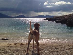 P beach bye
